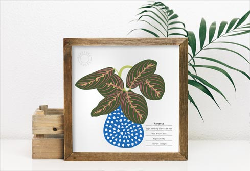 Maranta - plant survival guide